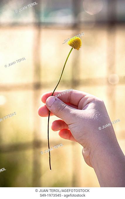 Girl hand holding a flower