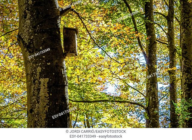 Beech forest of the Grevolosa, with more than 300 years of life. It contains trees 1 meter in diameter and 40 meters high. Lovely in autumn