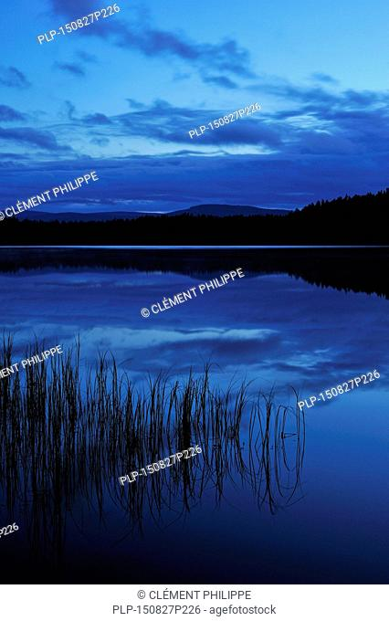 Silhouetted grass reflected in Loch Garten at night, Cairngorms National Park, Strathspey, Scotland, UK