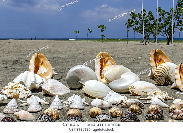 Shells display for sale at Kuta Beach, Bali, Indonesia