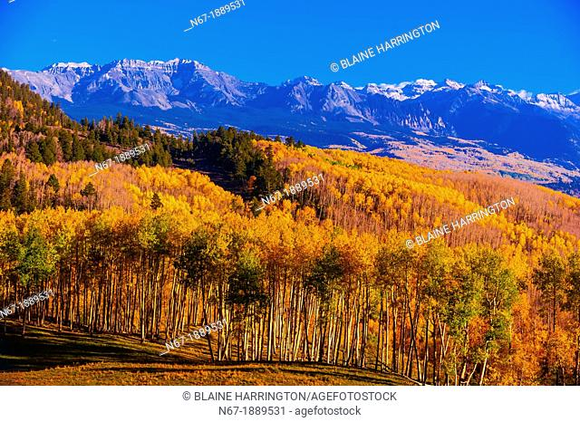 Fall color, Last Dollar Road, between Telluride and Ridgway, San Juan Mountains, southwest Colorado USA
