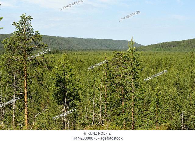 Forest in Oulanjan National Park, Kusamo