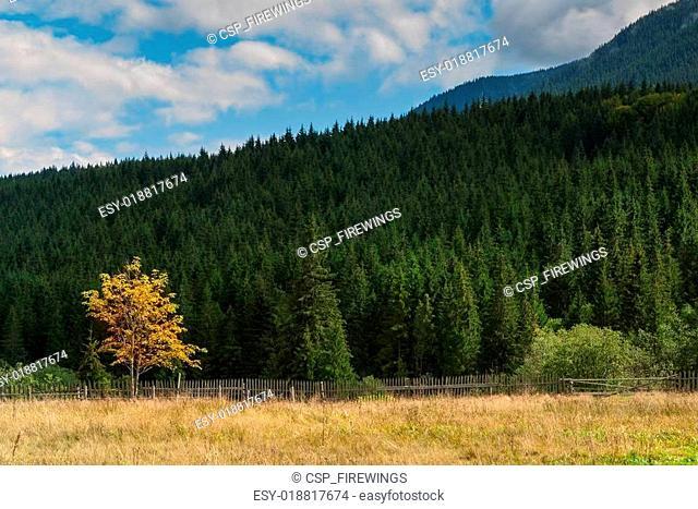 Yellow autumn tree