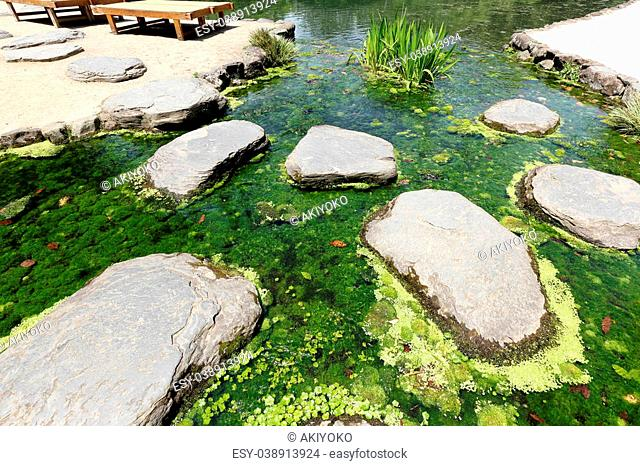 Japanese garden with river's plant