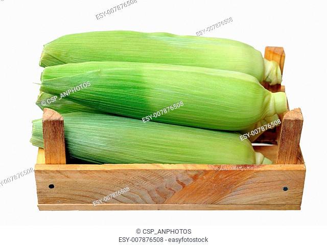 fresh corn in crate