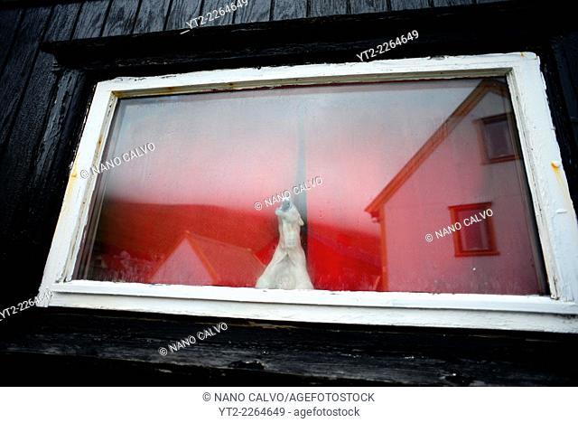 Bear figure inside a house in village of Gjójv, Eysturoy, Faroe Islands
