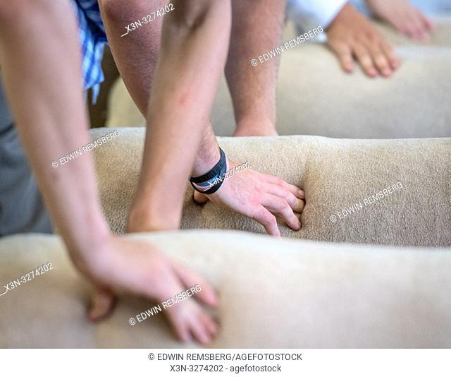 Hands presses into sheep's side during sheep judging, Timonium, Maryland