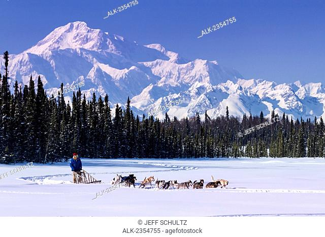 Dog musher runs his team during a spring training run on a lake with Mt. McKinley and Alaska Range in the background; Alaska, United States of America