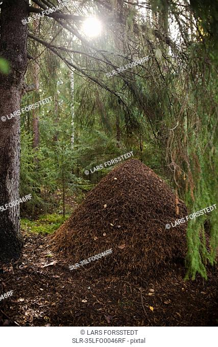 Pile of dead leaves in forest