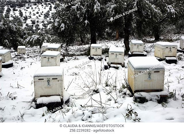 Snowcapped beehives Pelion Peninsula, Thessaly, Greece