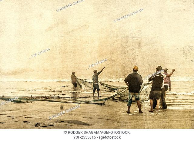 Fishermen hauling in their nets in a thick morning fog, The net contained three tonnes of mullet also know as harders or springers