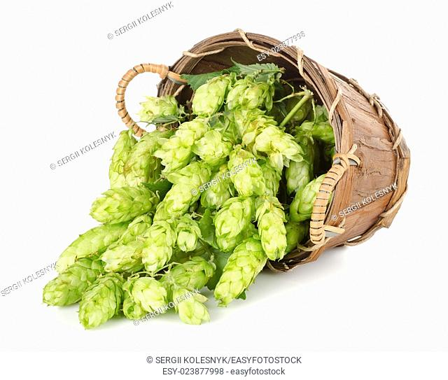 Hops in a wooden basket isolated on white background