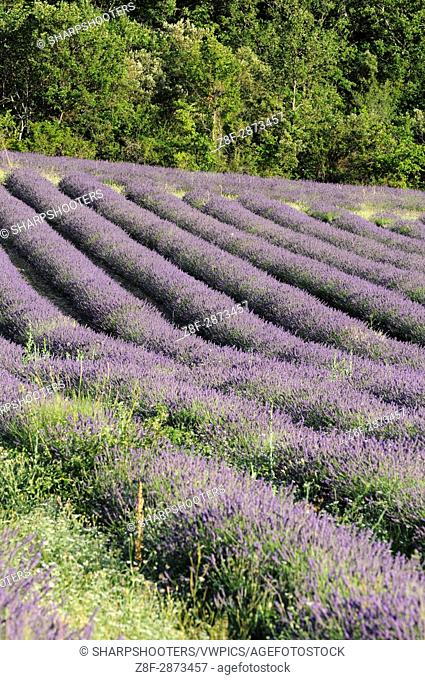 Croagnes, Provence, France