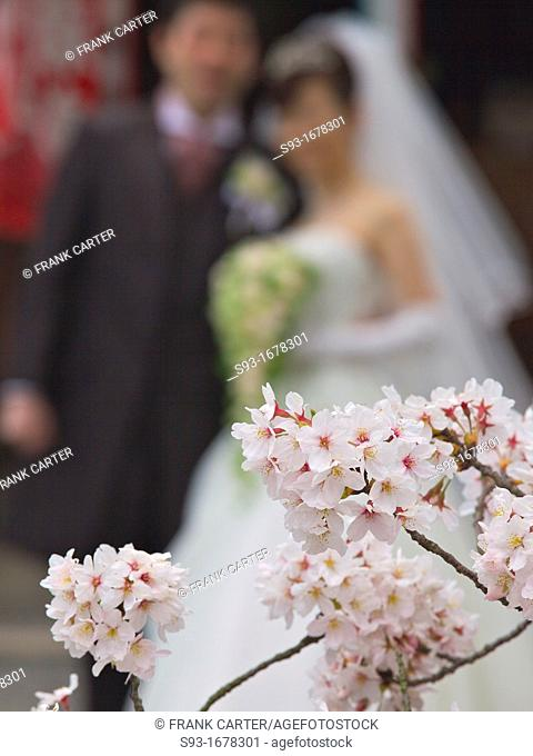 A bride and groom posing on the Path of Philosophy Tetsugaku no Michi under the cherry blossoms