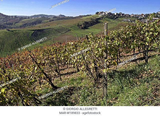 italy, lombardia, oltrepò pavese, canneto pavese, vineyards
