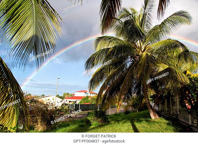 COCONUT PALM IN FRONT OF A RAINBOW, SAINT-PIERRE, MARTINIQUE, FRENCH ANTILLES, FRANCE