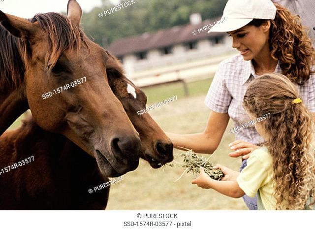 Girl and her mother feeding two horses