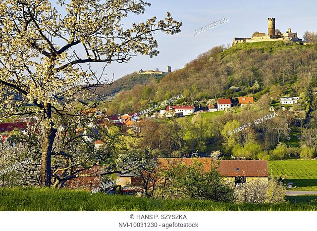 Flowering fruit trees at Muhlberg with Gleichen Castle and Mühlburg, Drei Gleichen, Thuringia Germany