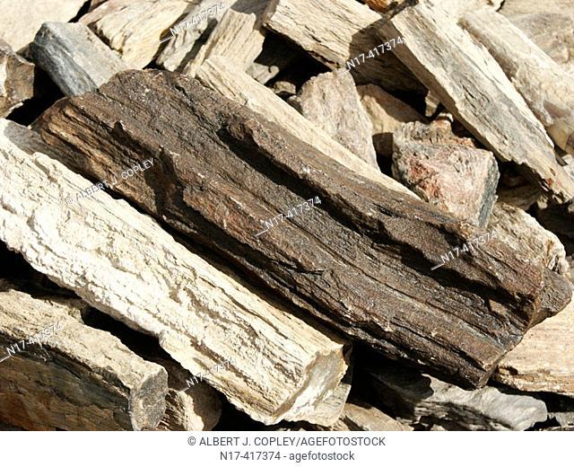 Ironwood (fossil)
