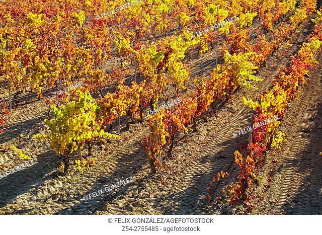 Laguardia, Rioja Alavesa vineyards, Basque Country, Spain