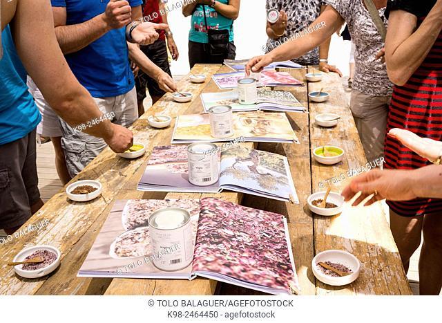 degustacion diversos tipos de de sal, Flor de Sal del Trenc, visita guiada,Salobrar de Campos, Campos del Puerto,Majorca, Balearic Islands, Spain