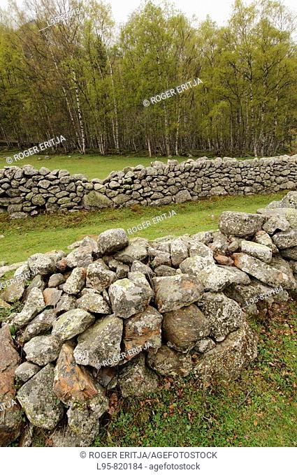 Stone walls in pasture meadows, Pyrenees, France