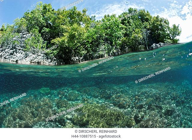 Shallow Coral Reef, Raja Ampat, West Papua, Indonesia