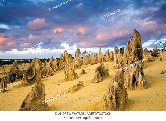 Sunset in the Pinnacles Desert of Nambung National Park  Cervantes, Western Australia, Australia