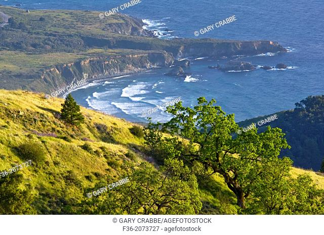 Oak trees and green hills in Spring over the ocean, Ventana Wilderness, Los Padres National Forest, Big Sur coast, California Oak trees and green hills in...