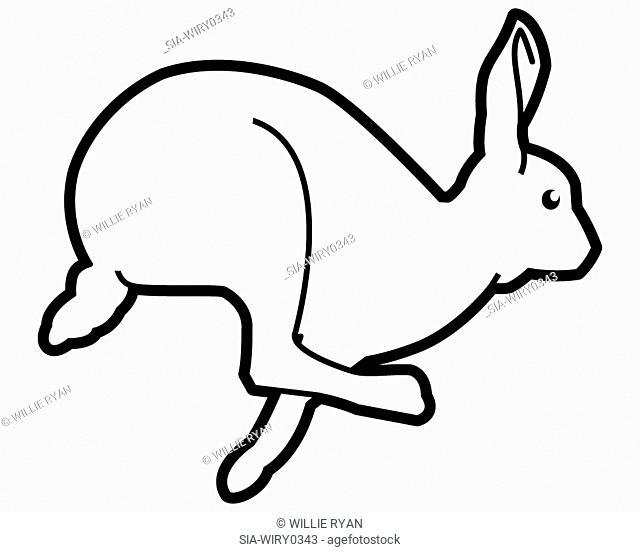 Jumping rabbit on white background