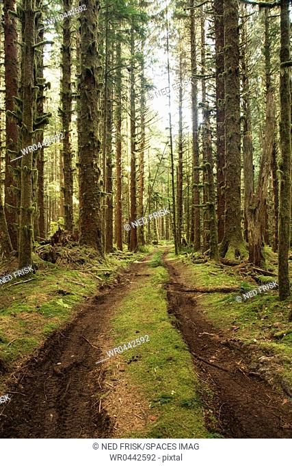 Dirt Road Through Forest