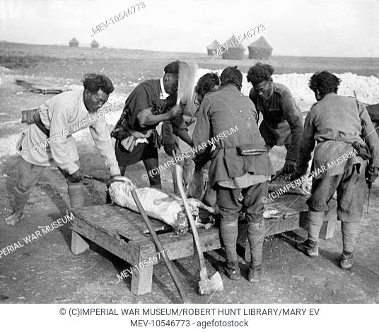 Allied Manipur butchers (from Burma) at work preparing meat near Arras, northern France, during the First World War
