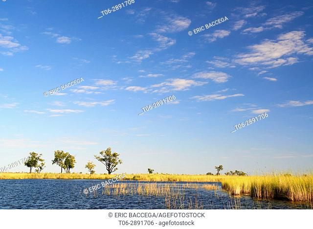 Landscape with water channel and high grass, Moremi National Park, Okavango Delta, Botswana, Southern Africa