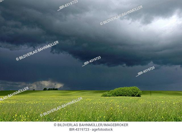 Dark clouds over field of rapeseed, Meesiger, Demmin-Land, Mecklenburg Lake District, Mecklenburg-Western Pomerania, Germany