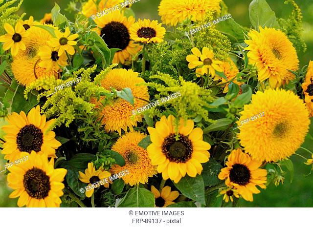 Yellow bunch of flowers