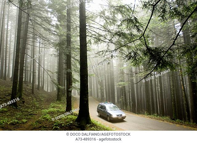 Parco delle Foreste Casentinesi. Wood near Camaldoli Hermitage. Stia. Tuscany. Italy