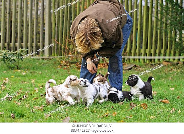 woman with six Australian Shepherd puppies in the garden