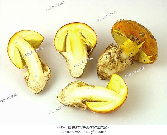 Caesar's mushroom  Amanita cesarea