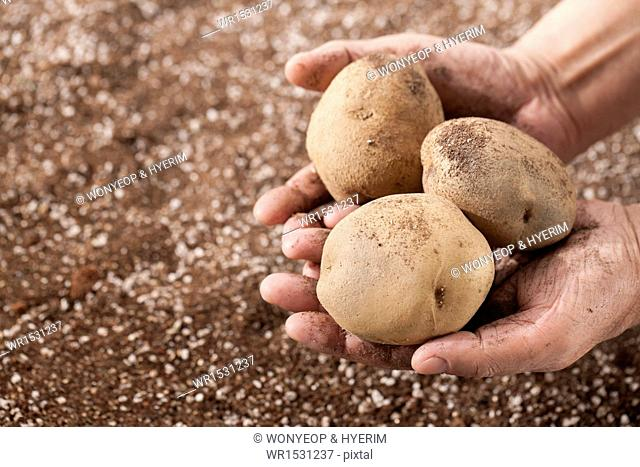 a man holding a handful of potatoes in his hands