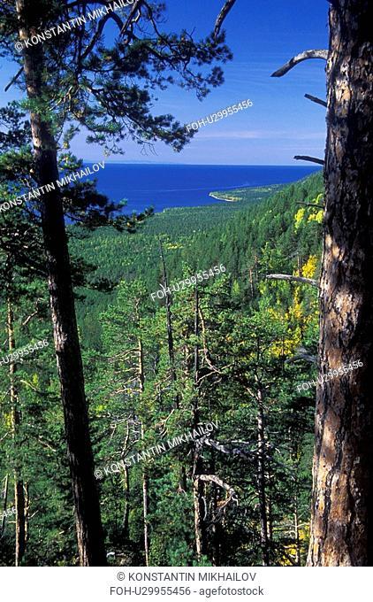 Baikal, East Siberia, Eatern Siberia, Siberia, flora, forest, forestland