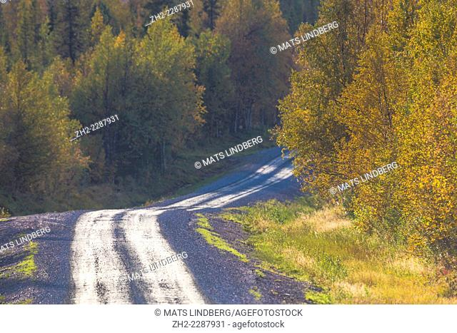 Road going through autumn landscape in Gällivare, Sweden