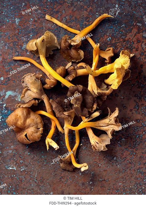 Yellow foot chantarelle wild mushrooms