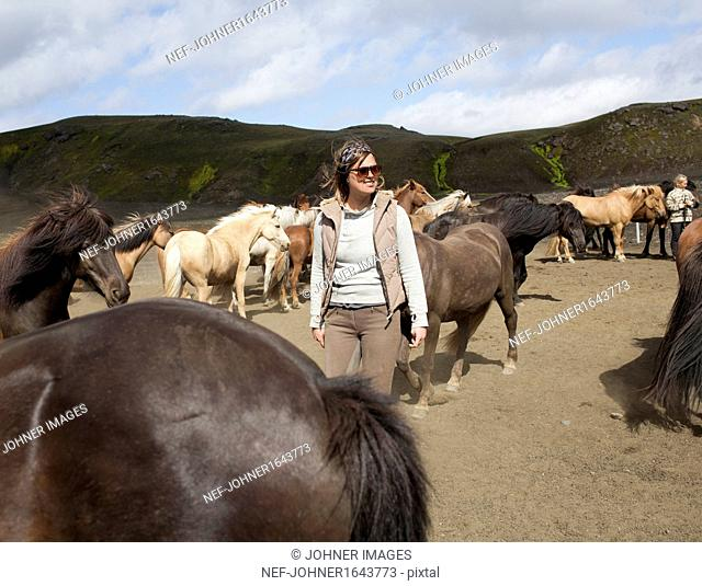 Woman and herd of Icelandic horses