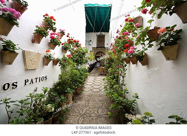 Restaurant Los Patios in the jewish quarter of Cordoba, Province Cordoba, Andalucia, Spain