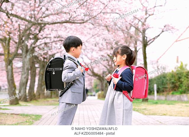 Japanese kids with cherry blossoms in a city park