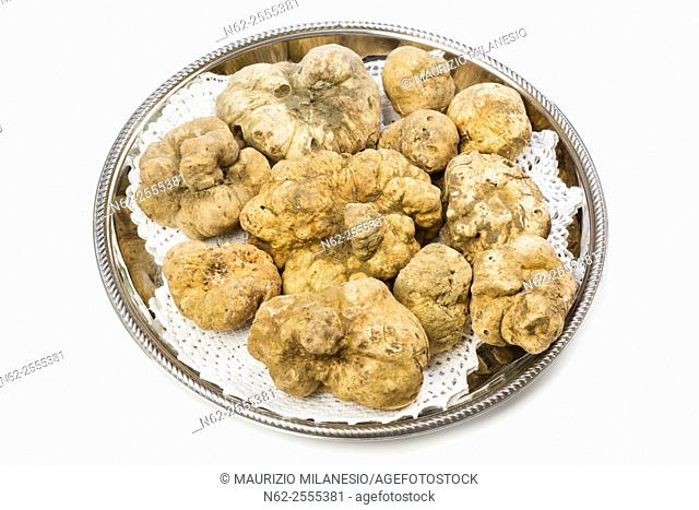 Many white truffles from Piedmont on steel tray placed on a white background