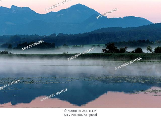 Lily pads floating on misty Chiemsee lake, Bavaria, Germany