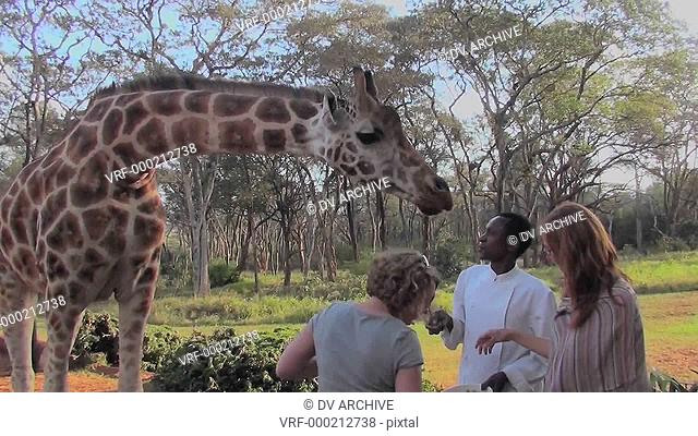 Tourists pet a giraffe in a zoo setting