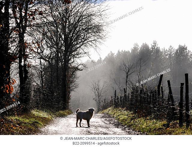 Landscape fog, La Bessière, Campuac, North Aveyron, Midi-Pyrénées, France
