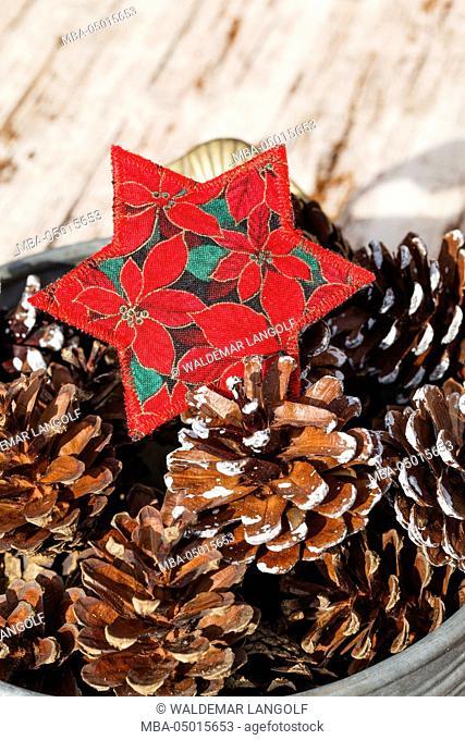 Christmas decoration, poinsettia, fir cone